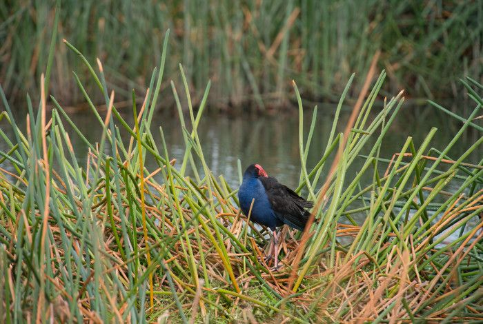 bird sitting in reeds