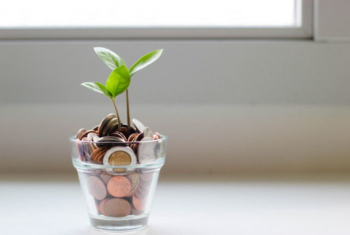 Plant in a pot of money