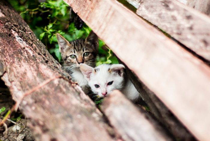 Stray kittens between logs