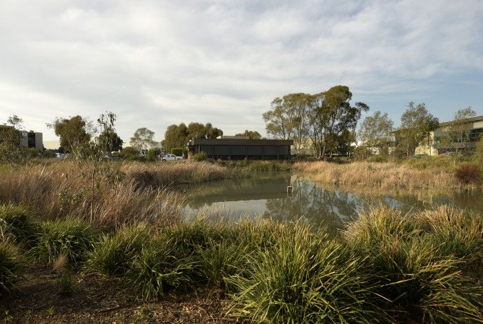 Dandenong South Estate wetland